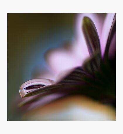 Colour Of Life XXXVII Photographic Print