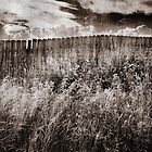 Fence by Garth  Helms