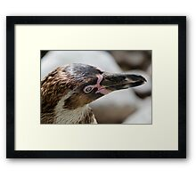 P-p-p-p pick up a Penguin Framed Print
