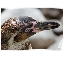 P-p-p-p pick up a Penguin Poster
