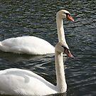 The Swans by Pamela Jayne Smith
