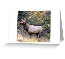 Old Elk Greeting Card