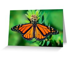 Monarch... Greeting Card