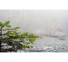 Balsam & Beach Fog Photographic Print