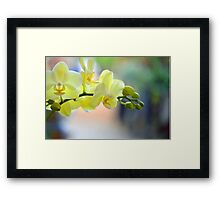 Yellow Orchid with an Angel design in the bloom Framed Print