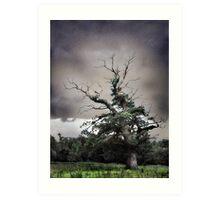Old Tree, Killarney National Park Art Print