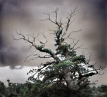 Old Tree, Killarney National Park by Garth  Helms