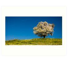 Single blossoming tree Art Print