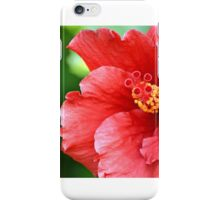 Red hibiscus bloom iPhone Case/Skin