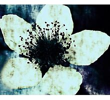 Dark Blue Photographic Print