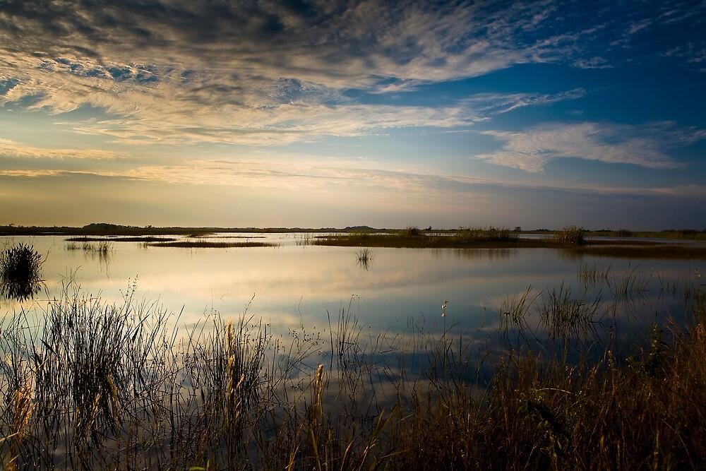 Morning Sawgrass by Denis Wagovich