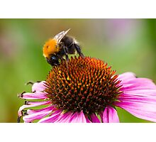 Looking for Nectar Photographic Print