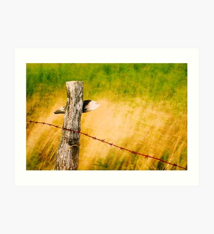 fence in the wind Art Print