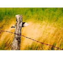 fence in the wind Photographic Print