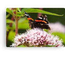 Red Admiral on Plant Canvas Print