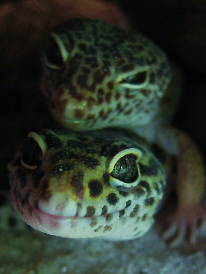 Gecko Love by jsmusic
