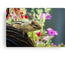 The Adventures of Chippy Chipmunk Canvas Print