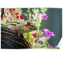 The Adventures of Chippy Chipmunk Poster