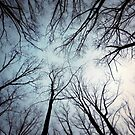 Looking up ! by Bine