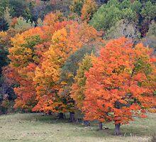 Autumn Colours by HALIFAXPHOTO