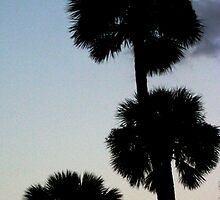 Palms at Sunset by Victoria DeMore