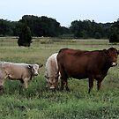 Country Bumpkins by Glenna Walker