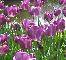 Purple Tulips by a Pond 2 by DPrior
