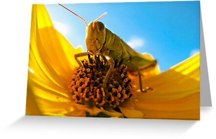 Am I Bugging You? by Mark Ramstead
