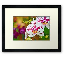 Unique spotty orchid Framed Print