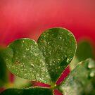 A Growing Love.  by Sherstin Schwartz