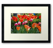 Colourful Friends Framed Print