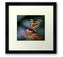 Ithomiidae Framed Print