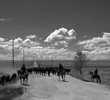 Cattle Drive by Scott Heinley