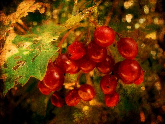 Little red berries by ©Maria Medeiros