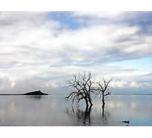 Lonely Trio Photographic Print