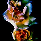 When Roses Laugh by Roger Sampson