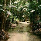Beautiful Jungle by Cheryl  Lunde