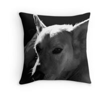 Gentle Compadre, Cappy Throw Pillow