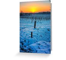 Sunset on snowy vineyard Greeting Card