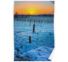 Sunset on snowy vineyard Poster