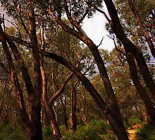 Bush walk trail by georgieboy98