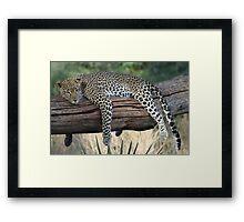 Lazy Leopard Framed Print