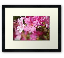 Rhododendrum Framed Print