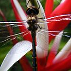 dragon on heliconia by ajax