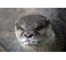 I Otter ... Photographic Print