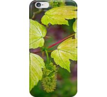 Glorious Maple leaf iPhone Case/Skin