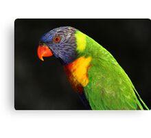 Rainbow Lorikeet-6403 Canvas Print