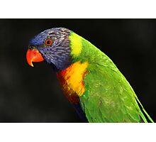 Rainbow Lorikeet-6403 Photographic Print