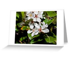 collect the pollen Greeting Card