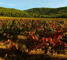 Provence vineyard in autumn by Patrick Morand